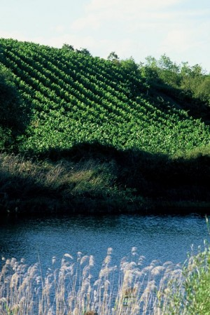 Naoussa_vineyard_lake (1)