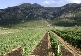 skouros vineyard