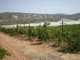 anagennisi vineyard